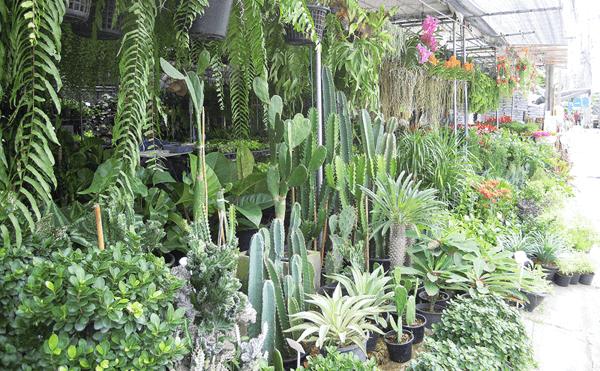 バンコクオートーコー市場の近くの植木屋