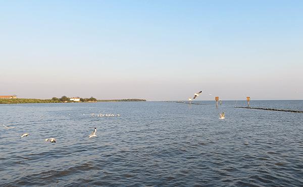 タイランド湾海鳥