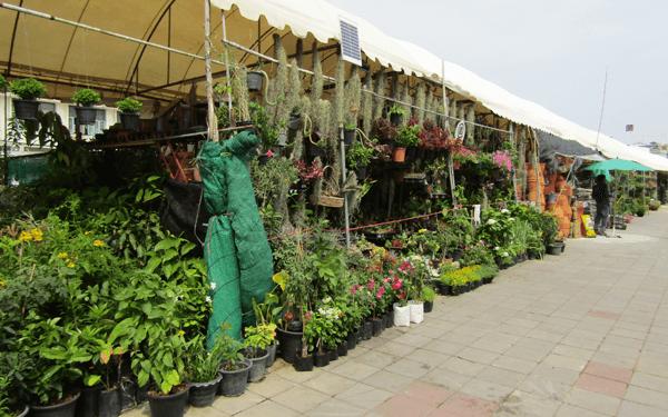 バンコクティワラート市場