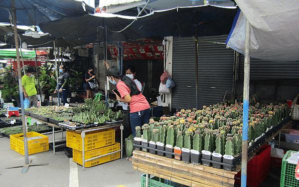 バンコクのチャットチャックマーケットの植木市